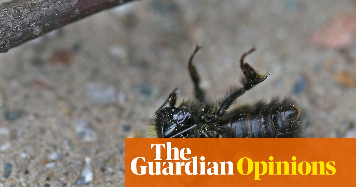 Why have 500 million bees died in Brazil in the past three