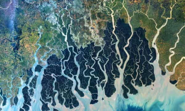 satellite view of mangrove forests