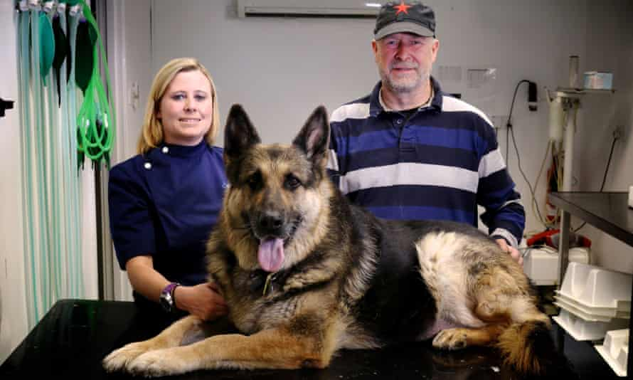 Murphy the German shepherd with vet Mandy Ball and his owner David Larson.