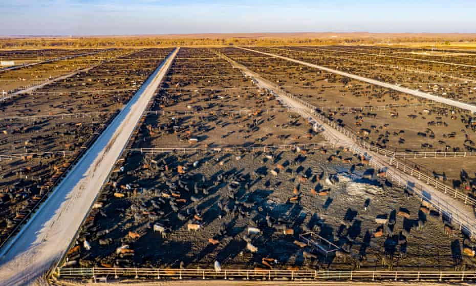 A Colorado feedlot with capacity for 98,000 cattle. Brown would like to see the 45% of the land surface used for animal farming returned to nature.
