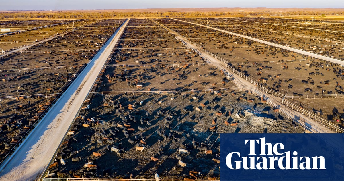 Meat accounts for nearly 60% of all greenhouse gases from food production, study finds