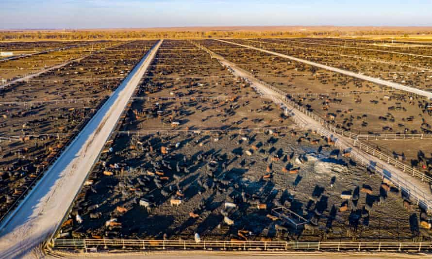 A single kilo of beef creates 70kg of emissions. This feedlot in Colorado can hold 98,000 cattle.