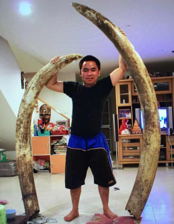 Boonchai poses with elephant tusks.