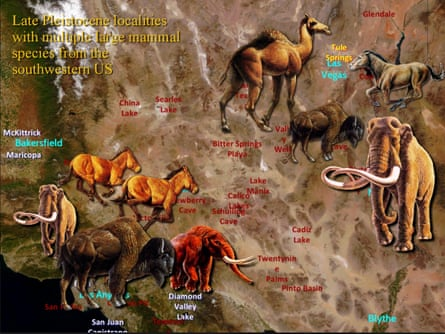 Ice age mammal distribution in the American southwest.