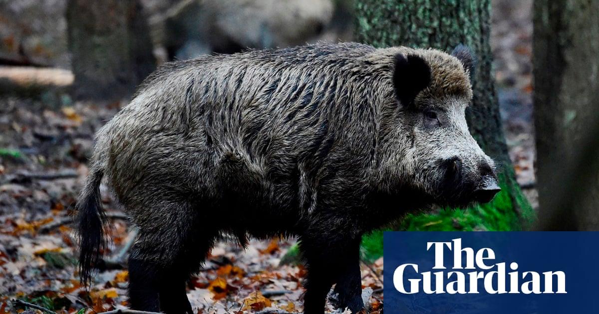 wild boar bites off man s fingertip in forest of dean uk news