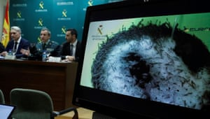 Spanish authorities announce to reporters that they have dismantled a Chinese network of elver poaching.