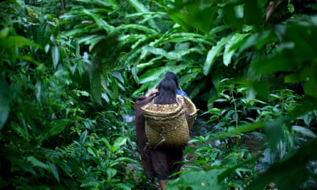 Ashaninka girls walk through a forest path as they return to their village in the Peruvian Amazon.