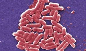 A strain of the E coli bacterium.