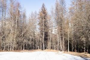 Woods in Pian Gelassa, Piedmont