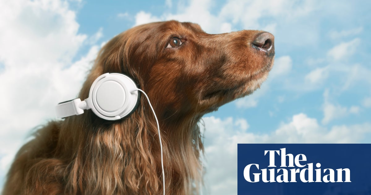 Petflix and chill: does your dog need a streaming service?
