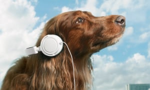 Pet sounds: research shows dogs prefer music genres that mimic their own heart rate.