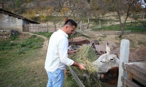 Elton Kikia feeds donkeys in a yard at his family's dairy farm in the village of Paper, Albania