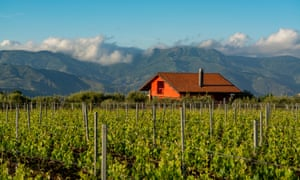 'One of Europes most diverse and creative wine regions': Sicilian vineyards in the Etna volcano region.