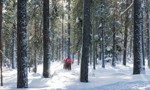 Family explore woodland on cross country skis