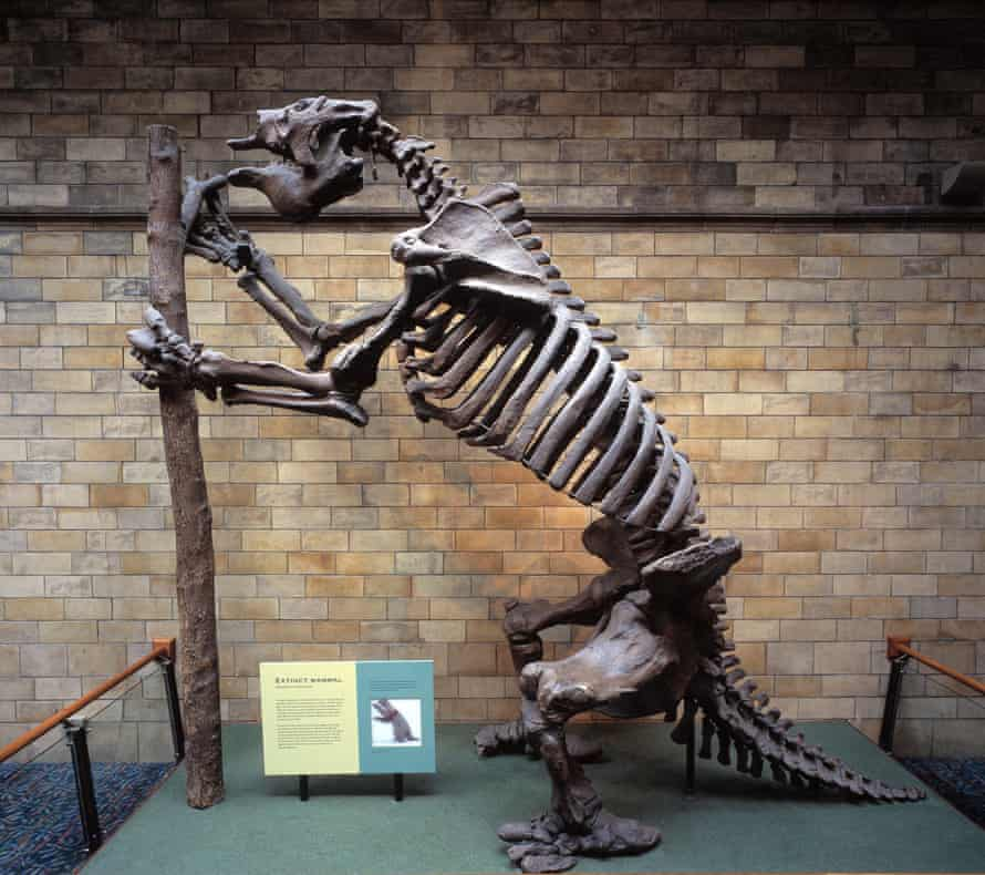 The giant ground sloth, or Megatherium, weighed an estimated six tonnes. Darwin chipped the skull of the animal out of the cliff face in Punta Alta, Argentina in 1832.