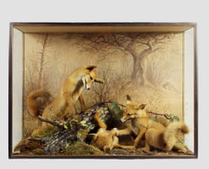Fox cubs by Peter Spicer, taxidermist of Leamington Spa, circa 1875.