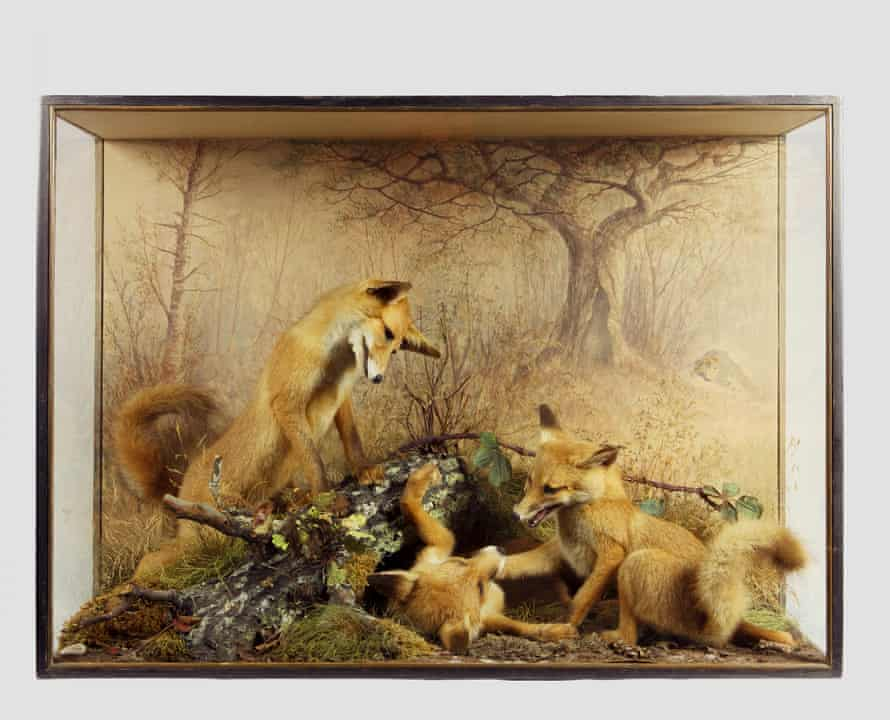 Fox cubs by Peter Spicer, taxidermist of Leamington Spa, circa 1875.