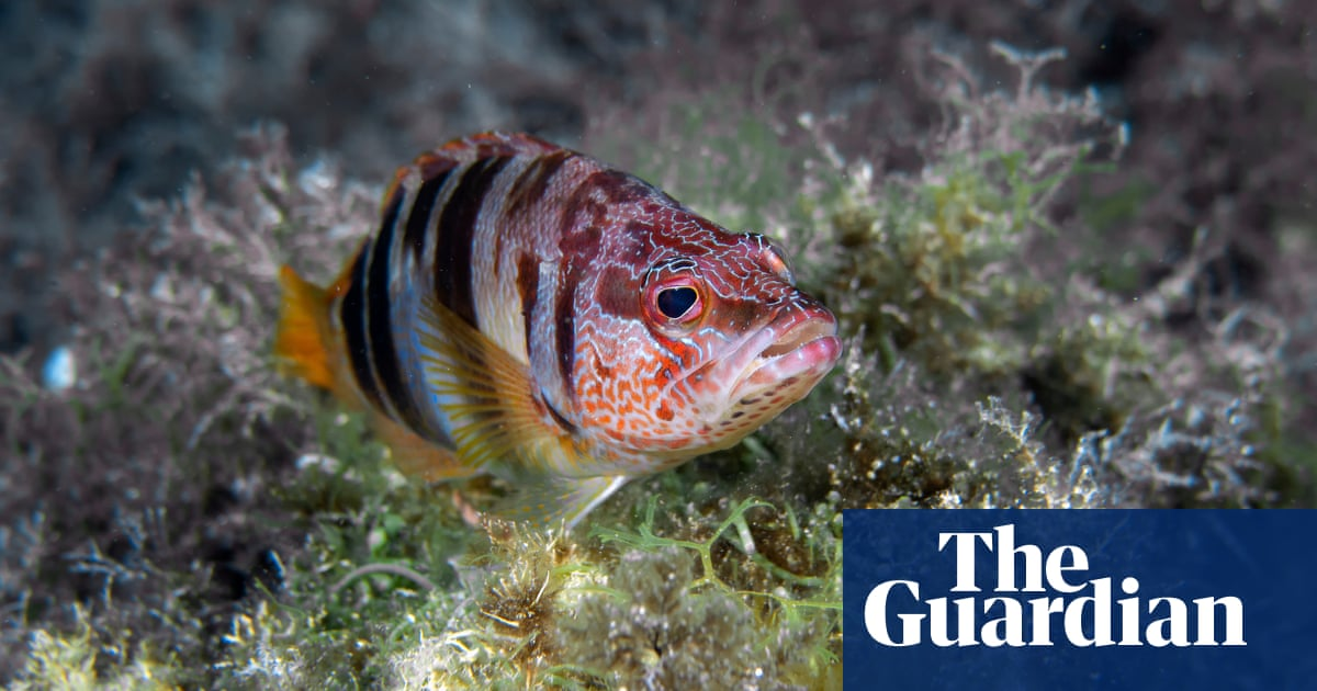 Mallorca marine reserve boosts wildlife as well as business, report finds