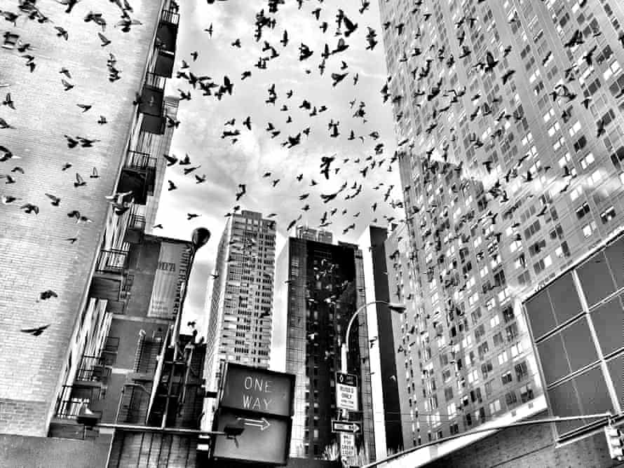 General view of New York, with birds flying around tall buildings