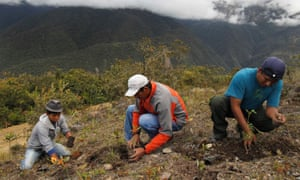 Workers plant seedlings in the Peruvian rainforest