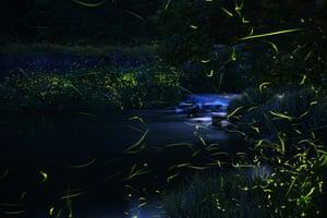 Fireflies leaving glowing lines