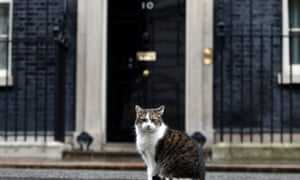 Larry the cat sits outside No 10