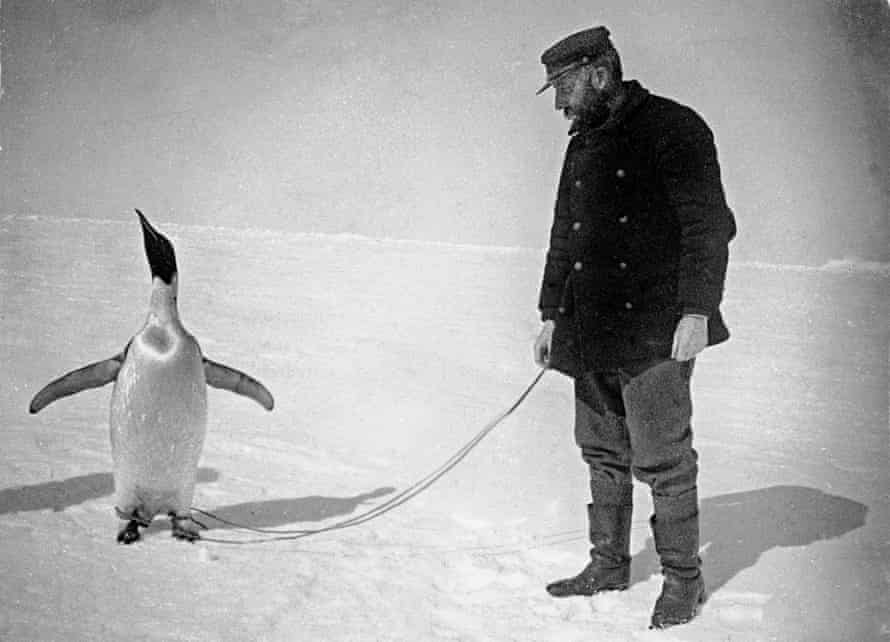 The leader of the Belgica voyage, Adrian de Gerlache, with an Emperor penguin he captured to eat