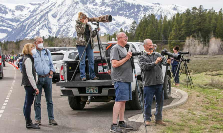 Visitors gather along the side of the road to try to photograph a grizzly bear with her cubs on Monday afternoon.