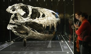 The skull of the Tyrannosaurus rex known as Tristan on display in Berlin