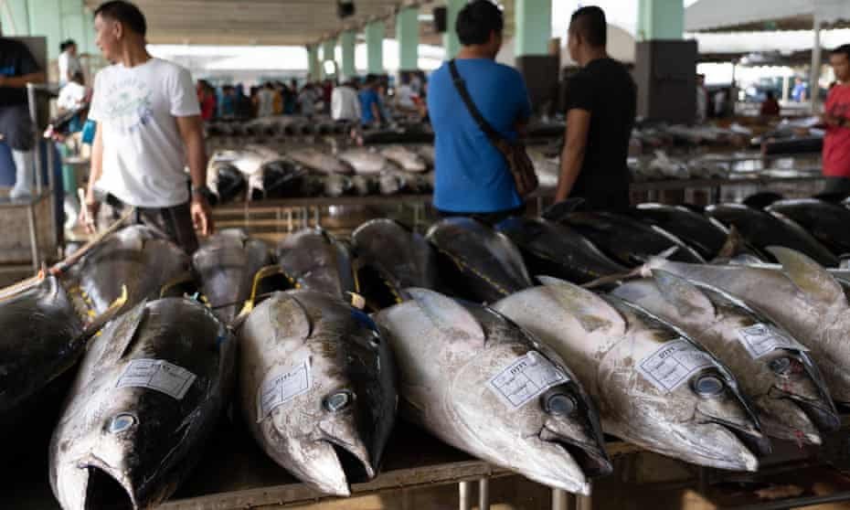 Yellowfin Tuna awaiting grading within the Fishport of General Santos,Philippines, 4 September 2019