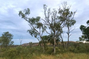 A waste rock pile behind the trees in Borroloola in the Northern Territory