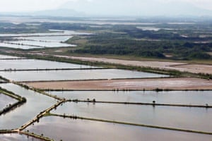 An aerial view of industrial shrimp pools constructed within protected mangrove forests inside the San Bernardo wildlife reserve in Choluteca.