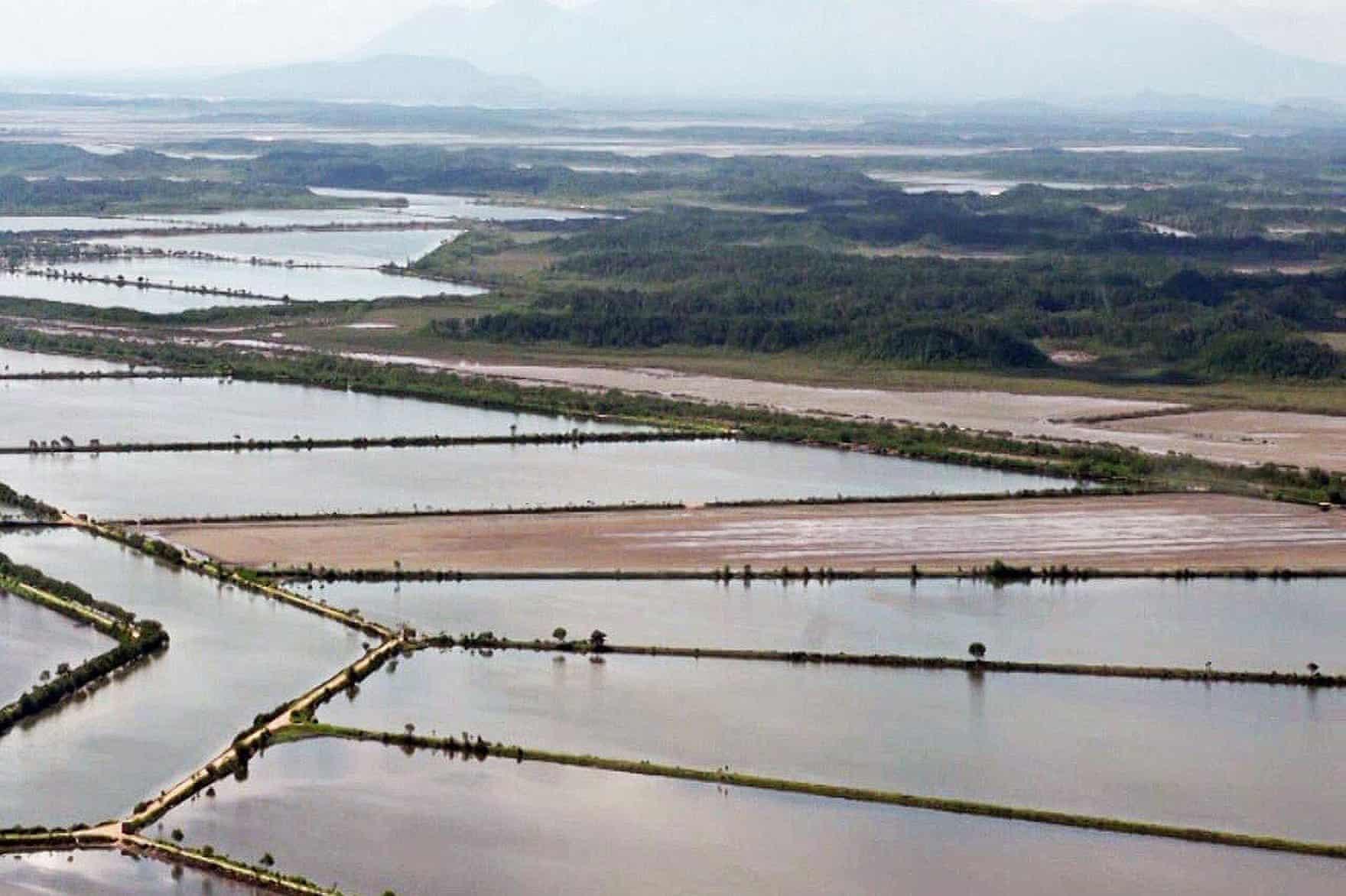 Honduran Shrimp Farms