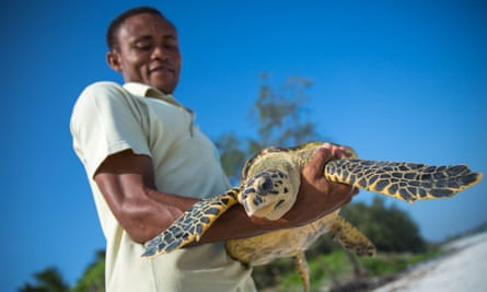 Fikiri Kiponda, a member of the Local Ocean Trust team, carries a Hawksbill turtle for release back to the ocean. The trust and Watamu Turtle Watch work to protect the future of sea turtles.