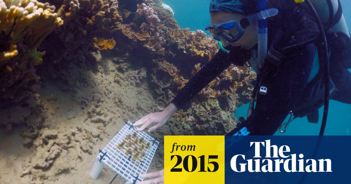 Scientists attempt to breed 'super coral' to save threatened reefs