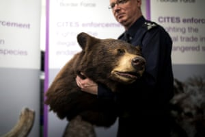 A Border Force officer moves a taxidermied brown bear