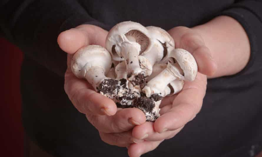Button mushrooms can now be 'edited' in the US.
