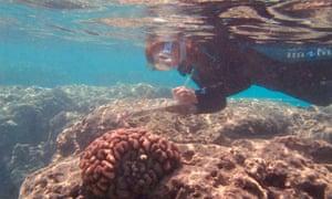 Dr Ku'ulei Rodgers conducting coral bleaching survey.
