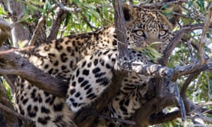 A leopard in South Africa