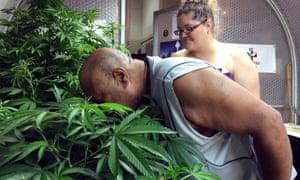 marijuana growers