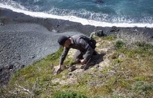 Wildlife officer Pat Freeling replants a Dudleya in Mendocino County, California