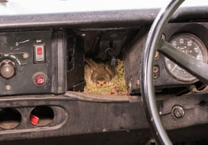 Dan Skinner, RSPB web designer, was surprised to find a robin had built a nest in the front of his Land Rover