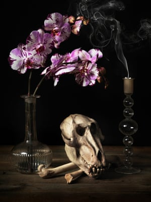 Skull and femurs of a drill with orchids