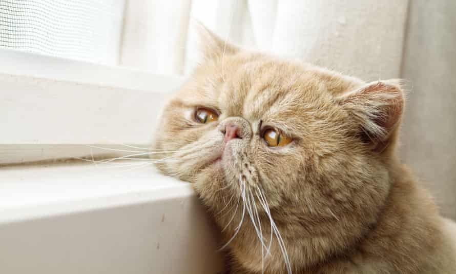 A cat resting its face on a window sill