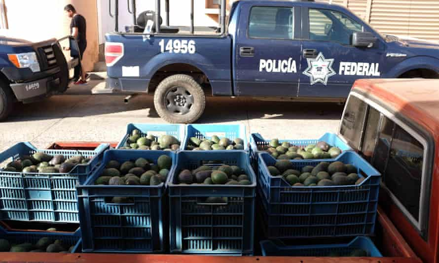 A Federal Police truck parked across from a shipment of avocados. There's no mistaking that Tancitaro is a city based around the avocado sector.