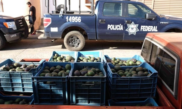 Mexico's avocado army: how one city stood up to the drug