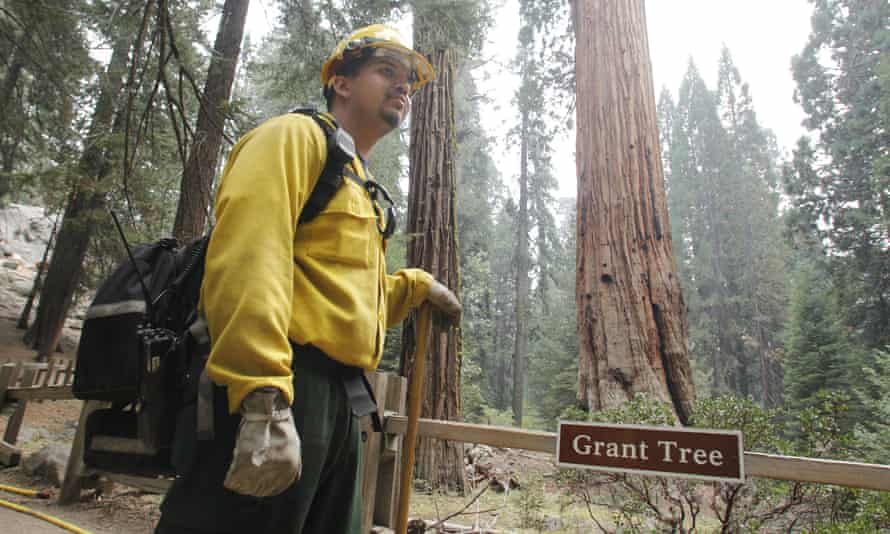 Firefighter at General Grant tree
