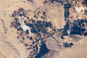 Bahariya oasis in the Sahara desert