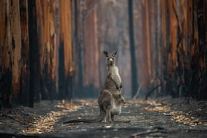 Man and nature category winner:Hope in a Burned Forest by Jo-Anne McArthur (Canada) An Eastern grey kangaroo and her joey who survived the forest fires in Mallacoota, Victoria.