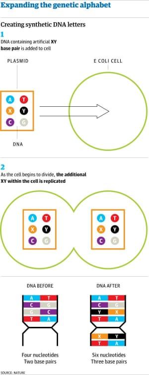 genetic alphabet